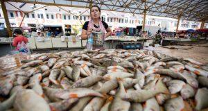 Скандал в Севастополе: гипотетический рыбный рынок разместили на Графской пристани