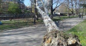 В центре Симферополя упавший тополь перегородил набережную реки Салгир