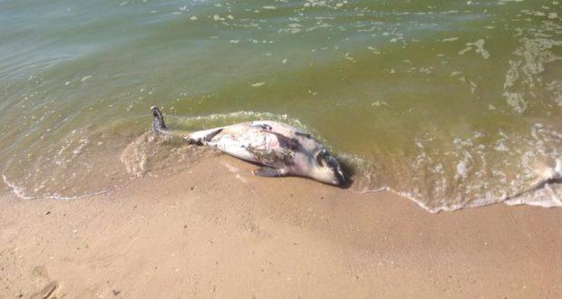 Найдены виновные в гибели дельфинов у берегов Крыма. Пограничники усилят контроль за рыбаками