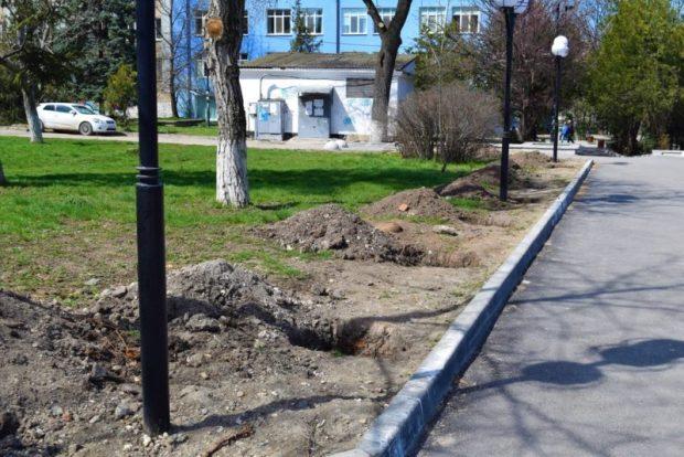 В Симферополе высадили крупномеры - кедры и можжевельник