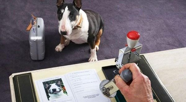 В Судаке ветеринары нашли собак без регистрации. Владельцы наказаны