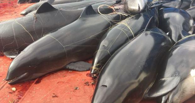 Что именно натворили украинские браконьеры у берегов Крыма. 46 убитых дельфинов