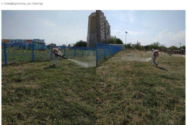 В Симферополе уничтожили более 5 гектаров амброзии