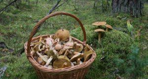 Роспотребнадзор Крыма предупреждает: крымские грибы потенциально опасны!
