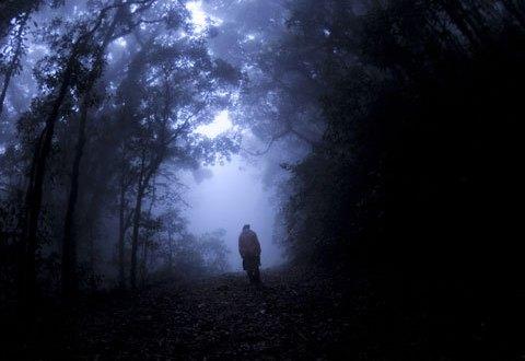 Сотрудники Севастопольского лесничества искали ночью в лесу браконьеров