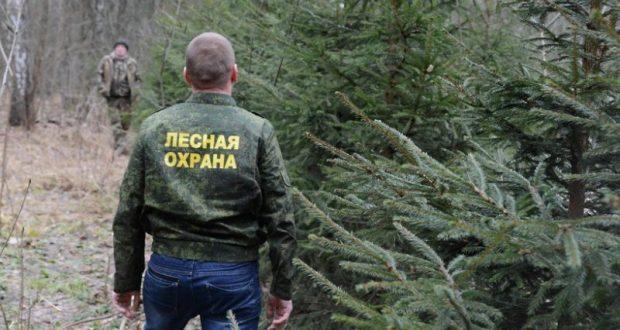 За неделю севастопольские лесничии выписали штрафов на сумму 42 300 рублей