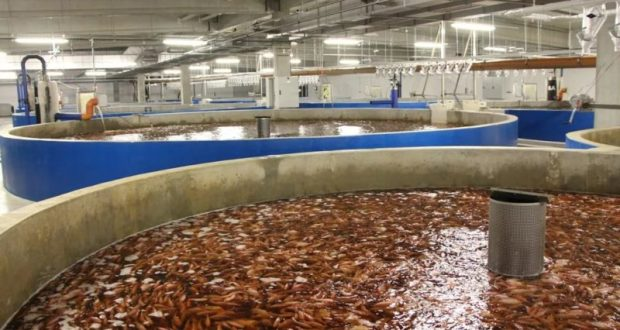 В Феодосии хотят выращивать морепродукты по инновационным технологиям