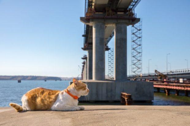 Секрет хорошей работы строителей Крымского моста: по понедельникам потискать и погладить Мостика