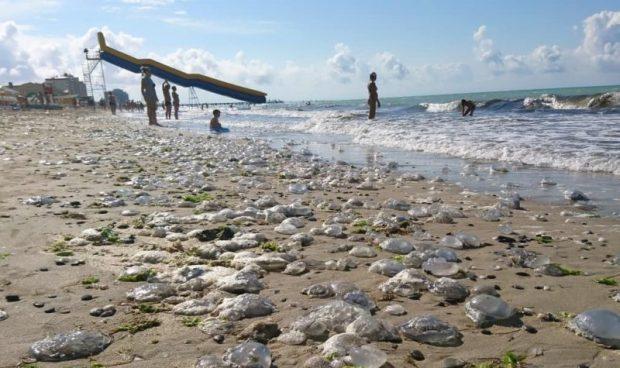 Керченское побережье атакует медуза-корнерот