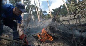 Пожар в урочище Уч-Кош, в горах над Ялтой потушен