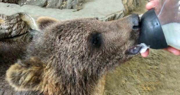 Мишка по имени Машка обосновалась в Бахчисарайском зоопарке