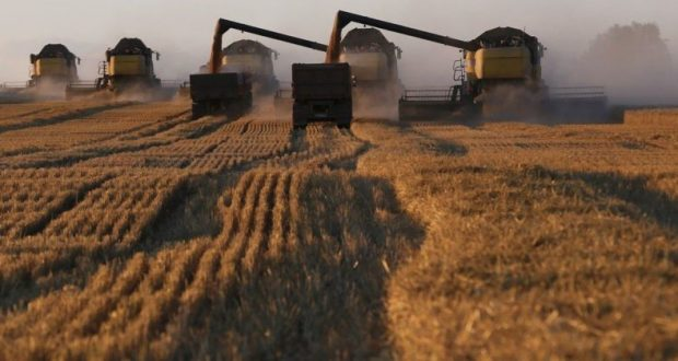 Урожай зерновых в Крыму – в два раза хуже прошлогоднего