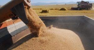 Власти Крыма будут просить Правительство РФ запретить вывозить пшеницу с полуострова