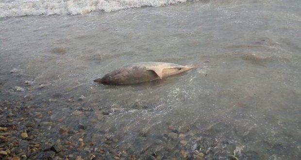 Комплексная экспедиция поможет понять причины гибели дельфинов Черного моря