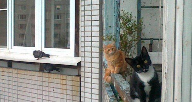 В Симферополе запретили содержать домашних животных на балконах и лоджиях