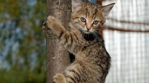 Суета вокруг кота в Симферополе