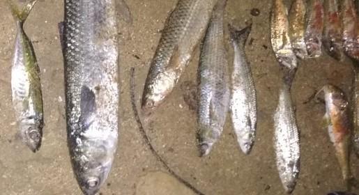 Под Евпаторией поймали рыбаков-браконьеров