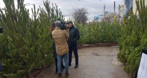 В Симферополе проверяют ёлочные базары