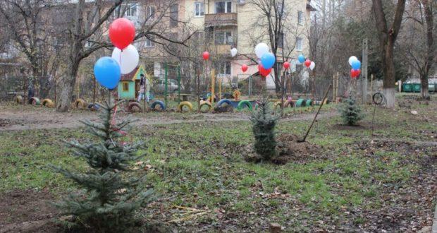 Голубые ели высадили в Симферополе