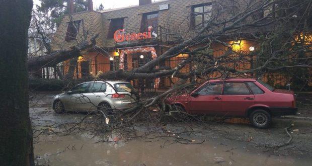 В Симферополе дерево придавило два автомобиля