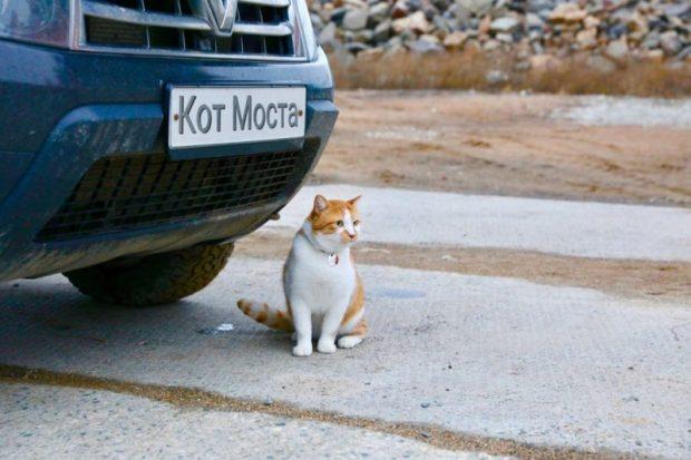 Мостик – талисман стройки Крымского моста – в ТОП котов года