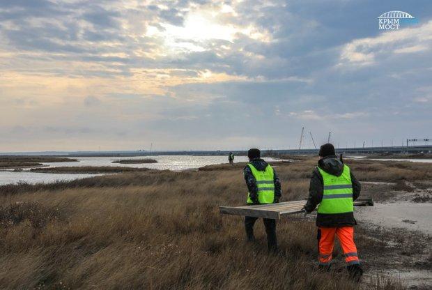 У Крымского моста установили кормушки для птиц