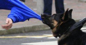 Инцидент в Севастополе: собака напала на ребёнка - владелица заплатила 50 тысяч рублей