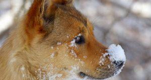 Дождь и мокрый снег - в Крым вернулась зима, но сильного похолодания не будет