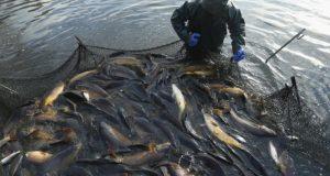 Андрей Козенко: Госдума приняла во втором чтении важный для рыбхозяйств Крыма законопроект