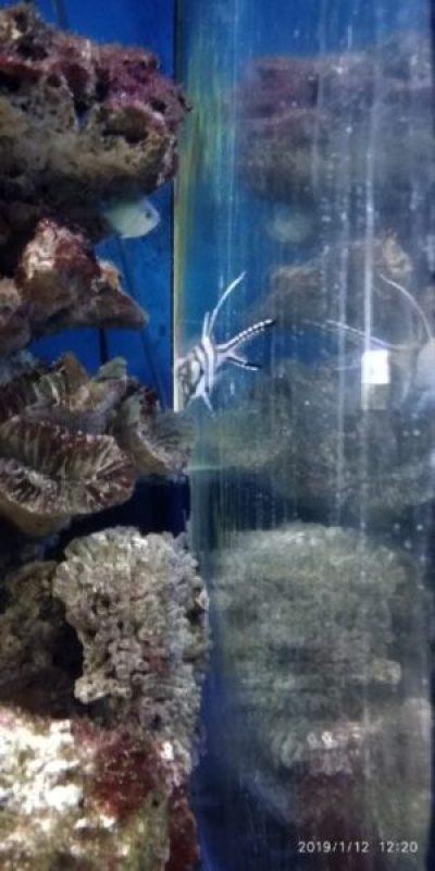 В Алуштинском аквариуме - пополнение. Прибыли тюлевые апогоны