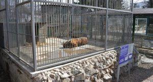 В зооуголке симферопольского Детского парка тигра и львов ждет новоселье