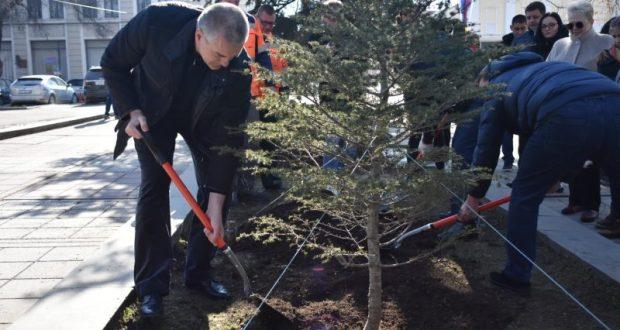 Сергей Аксёнов посадил атласский кедр в Симферополе