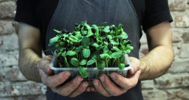 Микрозелень - модная штучка или отличный лайфхак для здоровья?