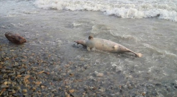 Росприроднадзор опроверг информацию о продаже мяса дельфинов на рынках Крыма