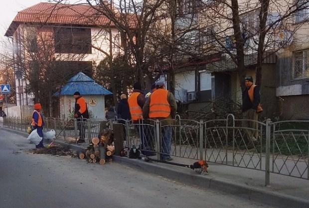 В Крыму - «сезон ветров», падают деревья