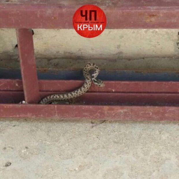Стоит паниковать? Жители Крыма в соцсетях жалуются на нашествие змей