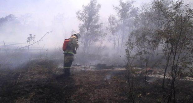 Пожар в Старо-Крымском лесничестве