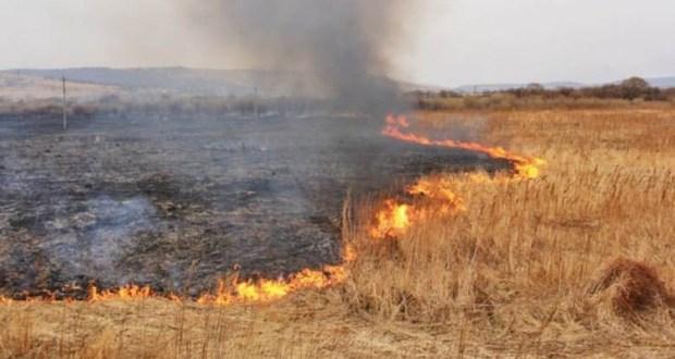 Пожар на поле пшеницы в Советском районе Крыма