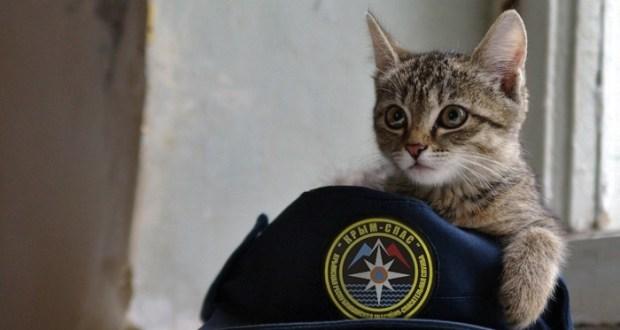 «КРЫМ-СПАС» и крымские коты: сильные всегда помогут слабым