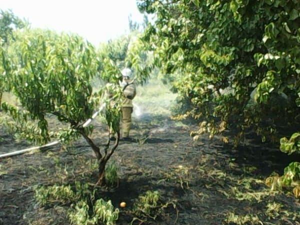 За прошедшие сутки в Крыму ликвидировано 10 «природных» пожаров