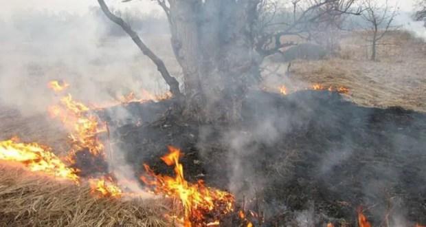 Тушить пожар в Курортном, под Феодосией мешал сильный ветер