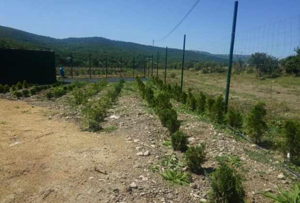 Вино и масла: в Крыму успешно развиваются предприятия в рамках СЭЗ
