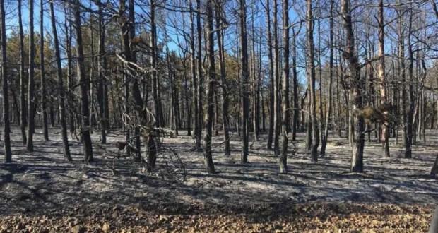 В Крыму тушили два лесных пожара