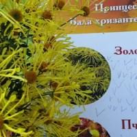В Никитском ботаническом саду выбрали Принцессу Бала хризантем-2019