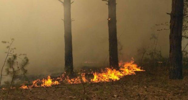В Крыму снова горит лес - на территории лесничества под Симферополем
