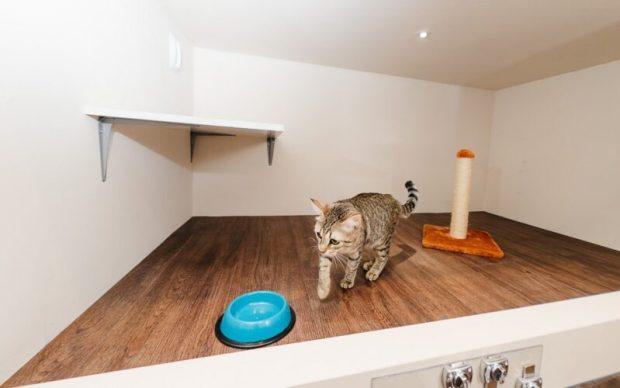 Где и с кем оставить котика на передержку – советы котоняни