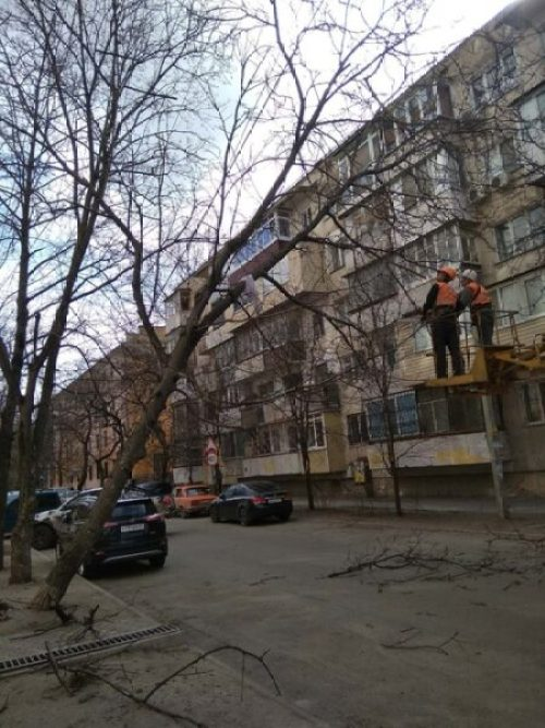 В Симферополе разбираются с аварийными деревьями - погода добавила хлопот