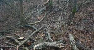 Боярышник - нельзя! В Симферопольском лесничестве задержали лесоруба