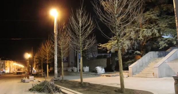На ул. Большая Морская в Севастополе высаживают деревья
