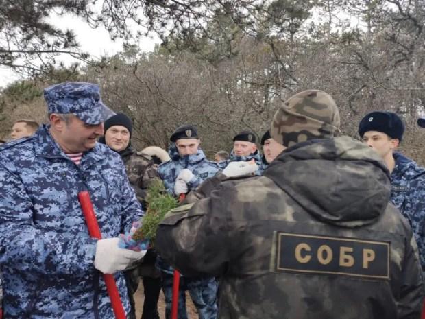 """""""Лес поколений"""": в Севастополе высадили свыше 300 саженцев хвойных пород"""